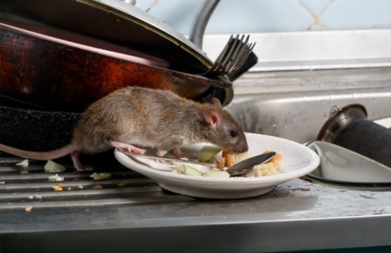 pests in Kitchen