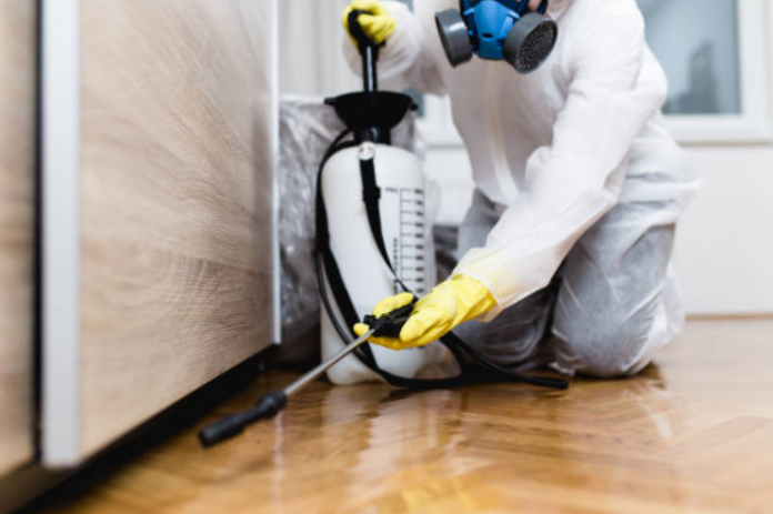 What is Pest Control and Why do you need regular pest control